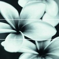 MAGIC flower glass | sklo | decor | set 3ks | 75x75 | 01S